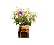 Picture of Royal Gold Tupur, .75 cu ft (5 gallon plant in bag)